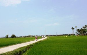 hoian country side